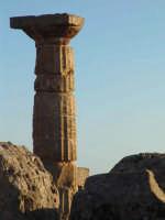 Colonna Greca, presso i templi di Selinunte  - Castelvetrano (13142 clic)