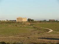 Selinunte panoramica del tempio E  - Castelvetrano (4410 clic)