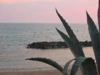 agave sul mare  - Scoglitti (4247 clic)