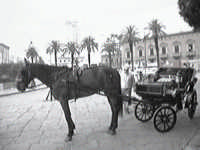 Cavallino roa roa.  - Palermo (1574 clic)