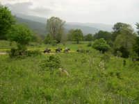 Parco dei Nebrodi Mangalaviti Passeggiata a cavallo.  - Longi (7019 clic)