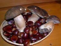 PORCINI E CASTAGNE DEI NEBRODI  - Galati mamertino (7017 clic)