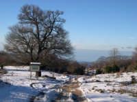 Parco dei Nebrodi Neve a Mangalaviti- Albero di Acero maestoso.  - Galati mamertino (7020 clic)