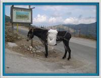 Asino Asino nel parco dei Nebrodi  - Longi (3905 clic)