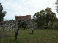 il Tempio della Concordia presso la Valle dei Templi di Agrigento   - Agrigento (6503 clic)