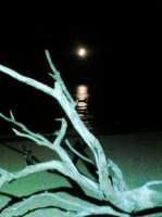 Notte d'Etate nella spiaggia delle Dune a S.Leone  - San leone (5779 clic)