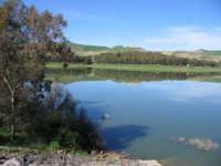 Lago Scanzano  - Marineo (7760 clic)
