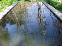 Abbeveratoio nel Bosco di Ficuzza  - Marineo (2900 clic)