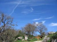 Scorcio del Bosco di Ficuzza all'inizio della primavera  - Marineo (4303 clic)