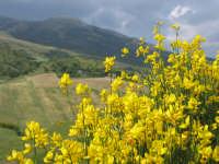 Località Tufo Gipsi  - Castellana sicula (2748 clic)