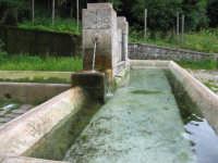 Bevaio del Faggio, nei pressi di Piano Zucchi  - Isnello (3357 clic)