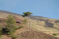 Monte Etna. Zona quasi desertica vicino al rifugio Galvarina. 1878 m s.l.m.  - Nicolosi (3043 clic)