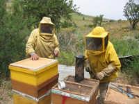 Alfio e la moglie si preparano per aprire la cassa dove le api hanno depositato il miele.  - Gangi (3044 clic)