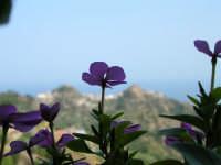 Fiore o paesaggio?  - Savoca (3812 clic)