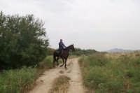 Fiume Simeto.Equitazione.  - Paternò (2972 clic)