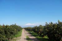 Vista dell'Etna tra gli agrumeti di Paternò.  - Paternò (7947 clic)