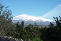 Veduta dell'Etna dalla campagna paternese.  - Paternò (1955 clic)