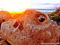 La pietra.<font color=#ffffff>spiaggia mare roccia estate sud tramonto</font>  - Isola delle correnti (1745 clic)