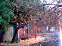 Gocce sui rami.<font color=#ffffff>albero alberi pioggia</font>  - Santa maria la scala (6212 clic)