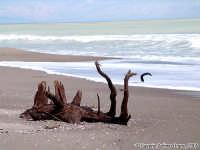 L'ultima oasi.<font color=#ffffff>spiaggia mare legna</font>  - Simeto (4679 clic)
