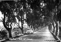 Regalbuto - Via Palermo (Calvario)Anni 50  - Regalbuto (8281 clic)