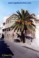 Via Roma (C'era una volta questa palma...)   - Regalbuto (995 clic)