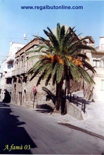 Via Roma (C'era una volta questa palma...) - REGALBUTO - inserita il 18-Dec-15