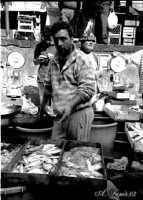 La Pescheria: venditore di pesce.  - Catania (5006 clic)