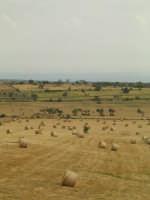 in un pomeriggio un campo di grano   - Ragusa (2913 clic)