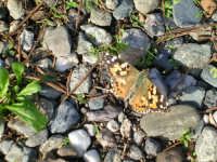 la farfalla  - Scicli (3586 clic)