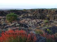 La Flora dell'Etna...  - Zafferana etnea (1566 clic)