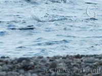 Lungomare di Marina di cottone (schizzo)  - Fondachello di mascali (4542 clic)