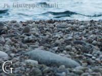 Lungomare di Marina di cottone (battigia)  - Fondachello di mascali (7906 clic)