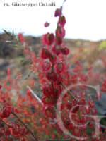 I particolari della flora dell'Etna...  - Zafferana etnea (1628 clic)