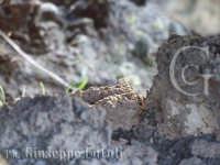 I particolari della lava dell'Etna...  - Zafferana etnea (1588 clic)