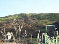 I paesaggi dell'Etna...  - Zafferana etnea (1556 clic)