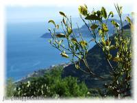 Mar Ionio Costa Ionica  - Forza d'agrò (5583 clic)
