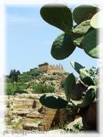 Tempio di Giunone Il Tempio di Giunone con la flora locale  - Agrigento (2742 clic)