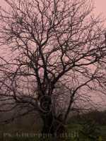 La Natura...  - Viagrande (6413 clic)