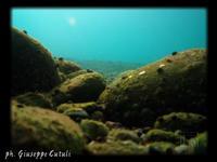 Le profondità  - Fiumefreddo di sicilia (4661 clic)