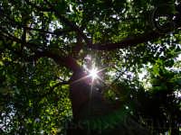 Sole tra gli alberi  - Catania (3360 clic)