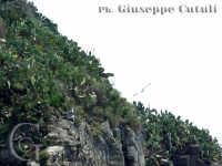Gabbiani sull'isola Lachea.  - Aci trezza (3255 clic)