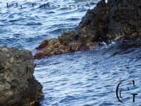 Scoglio che fuoriesce dal acqua del mare di Acitrezza  - Aci trezza (2186 clic)