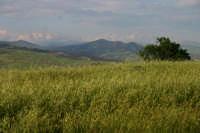 Paesaggio madonita2  - Collesano (2939 clic)