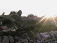 tramonto di campagna  - Scicli (1495 clic)