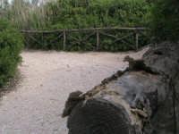 tratto sentiero che porta alla foce   - Donnalucata (2179 clic)