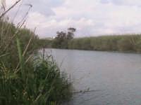 fiume irminio  - Donnalucata (2039 clic)