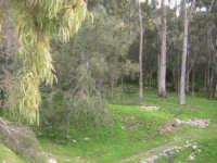 area forestale in contrada fiumara SCICLI adriano aprile