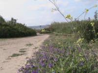 sentiero conducente alla foce del fiume irminio  - Donnalucata (2703 clic)