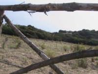 riseva naturale-macchia forestale fiume irminio  - Donnalucata (2654 clic)